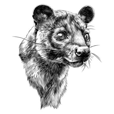 Illustration for Fossa sketch graphic design. - Royalty Free Image
