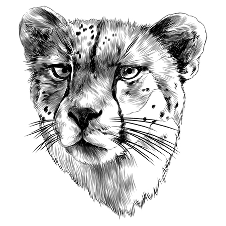 Illustration pour Cheetah head sketch graphic design. - image libre de droit