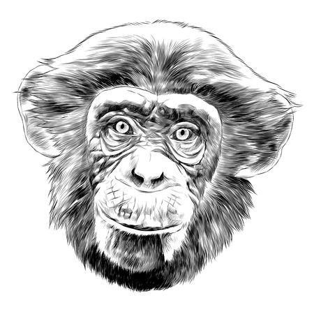 Photo pour Monkey head sketch graphic design. - image libre de droit