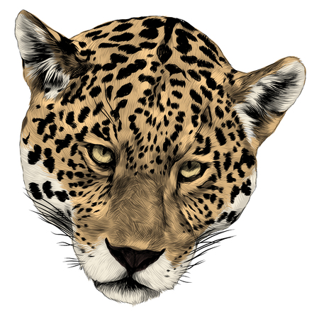 Illustration pour Jaguar head sketch graphic design. - image libre de droit