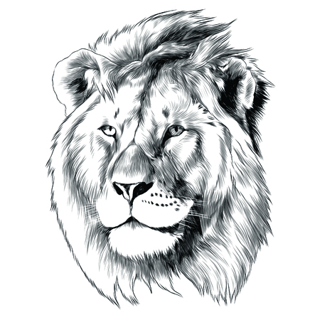 Illustration for Sketch of lion head  graphic design. - Royalty Free Image