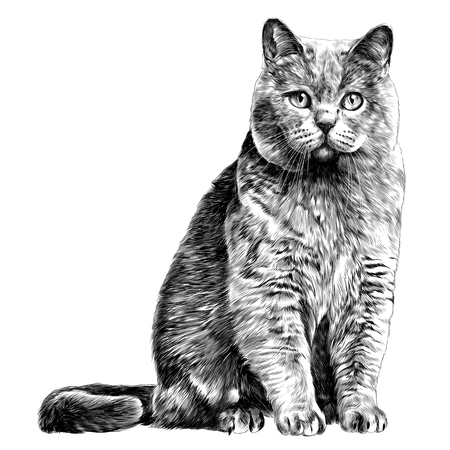 Illustration for cat sketch vector graphics monochrome black-and-white drawing - Royalty Free Image