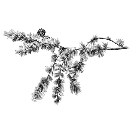 Illustration for larch branch sketch vector graphics monochrome black-and-white drawing - Royalty Free Image