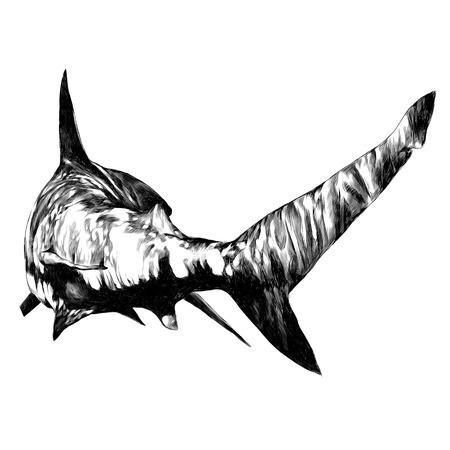 Ilustración de shark sketch vector graphics monochrome black-and-white drawing - Imagen libre de derechos