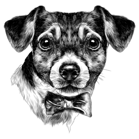 Illustration pour dog Jack Russell Terrier with bow head sketch vector graphics monochrome black-and-white drawing - image libre de droit