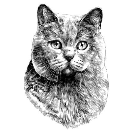 Illustrazione per cat head sketch vector graphics monochrome black-and-white drawing - Immagini Royalty Free