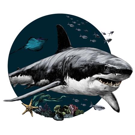Ilustración de shark sketch for t-shirt vector graphics color picture - Imagen libre de derechos