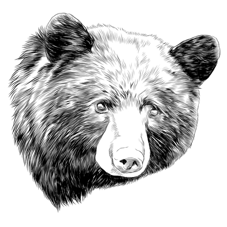 Illustration pour black bear sketch head vector graphics monochrome black and white drawing - image libre de droit