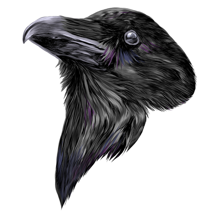 Illustration pour the Raven head sketch vector graphics color picture - image libre de droit