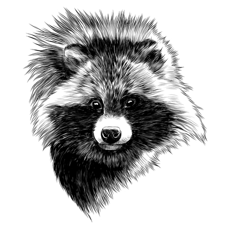 Illustration for the raccoon dog sketch head vector graphics monochrome black and white drawing - Royalty Free Image