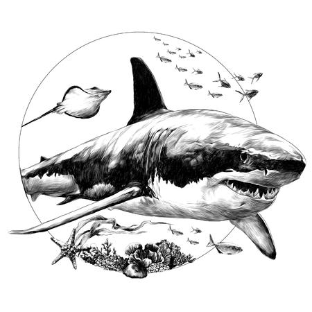 Ilustración de Shark sketch for t-shirt vector graphics monochrome, black-and-white drawing. - Imagen libre de derechos