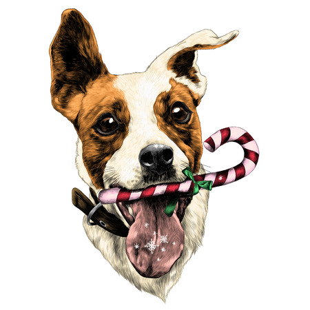 Ilustración de Head dog Jack Russell Terrier fun with candy, sketch. Vector graphics, color picture. - Imagen libre de derechos