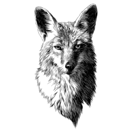 Illustration pour Coyote sketch, head vector graphics. Monochrome, black and white drawing. - image libre de droit