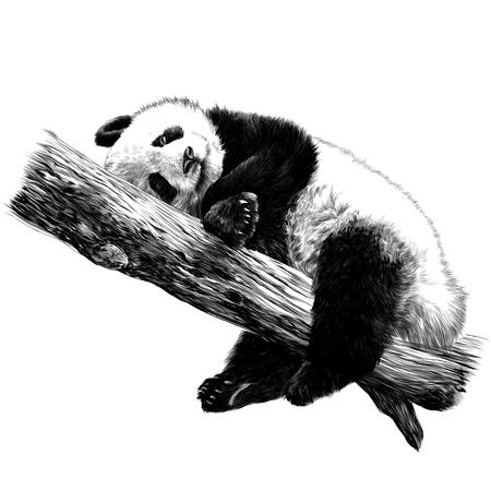Illustration pour Panda lies sleeping on a branch sketch vector graphics monochrome black-and-white drawing - image libre de droit