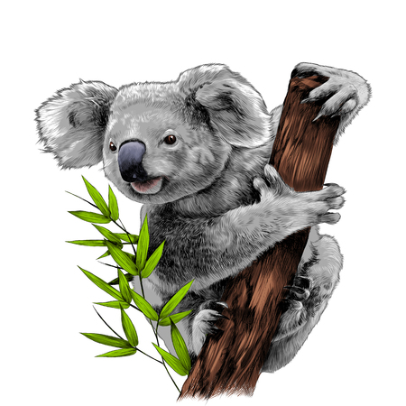 Ilustración de Koala sitting on a eucalyptus snag eats sketch vector graphics color picture - Imagen libre de derechos