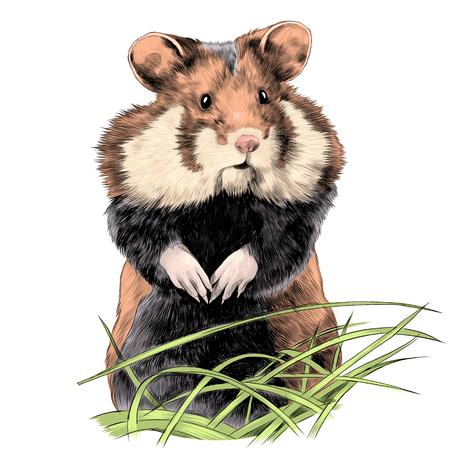 Illustrazione per hamster with fat cheeks standing in the grass sketch vector graphics color picture - Immagini Royalty Free
