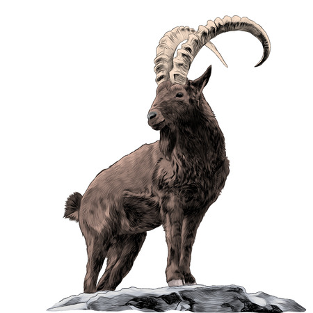 Illustration pour Mountain goat sketch vector - image libre de droit
