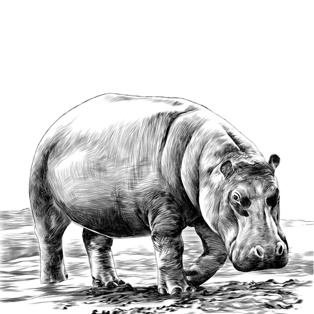 Illustration for Hippo sketch vector. - Royalty Free Image