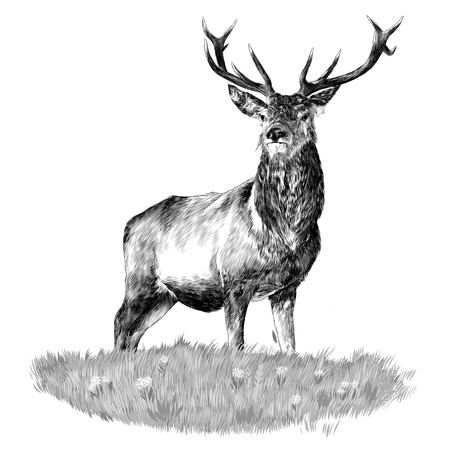 Illustration pour Deer head sketch vector. - image libre de droit
