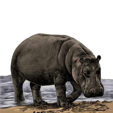 Illustration for the Hippo is on the sandy shore of the sketch vector graphics color picture - Royalty Free Image
