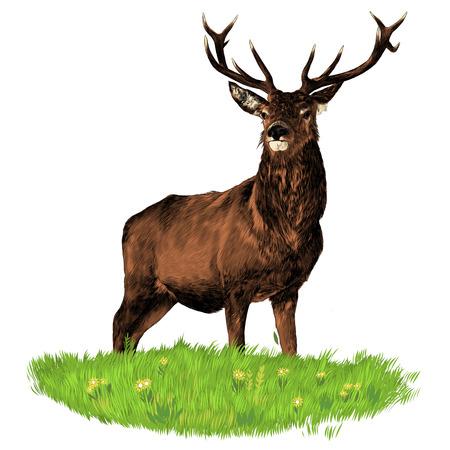 Ilustración de Confident and dominant deer standing on a green grass graphics sketch colored drawing - Imagen libre de derechos