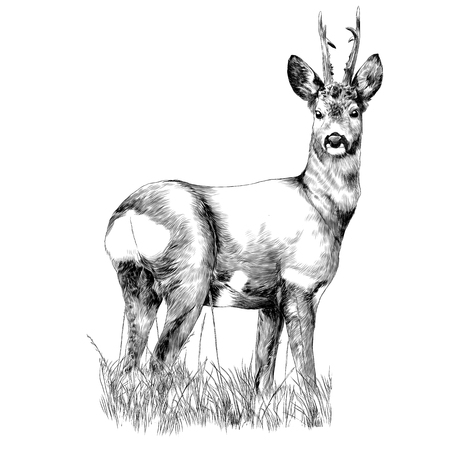Illustration pour Deer stands in the dry grass sketch vector graphics monochrome drawing - image libre de droit