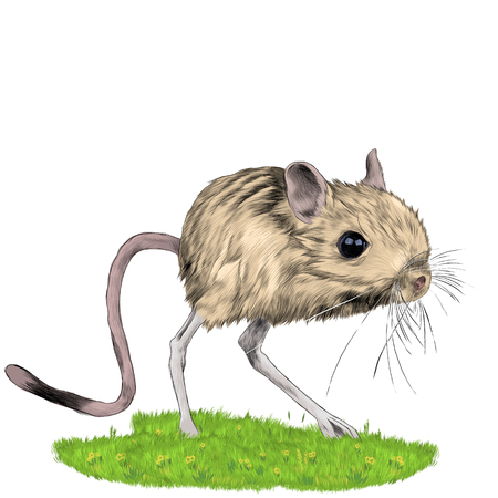 Illustrazione per jerboa standing in the grass sketch vector graphics color picture - Immagini Royalty Free