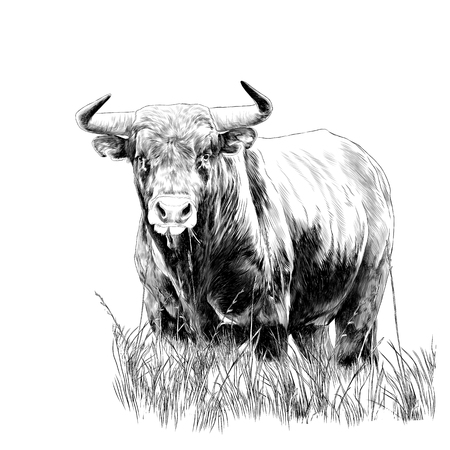 Illustration pour bull sketch vector graphics monochrome black-and-white drawing - image libre de droit