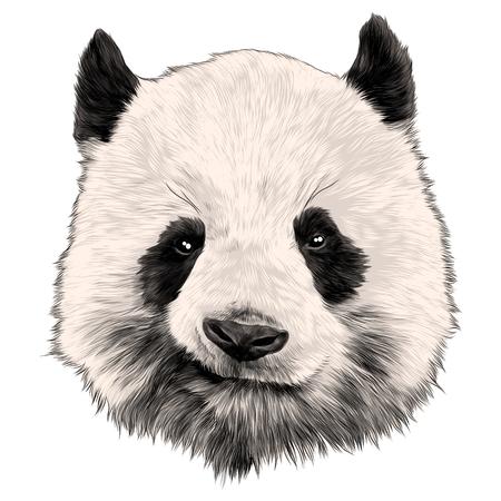 Illustration pour Head Panda grins sketch vector graphics color picture - image libre de droit