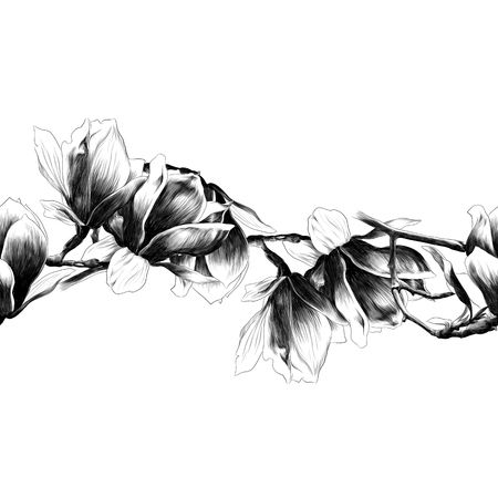 Illustration for Seamless strip of Magnolia flower. Sketch vector. - Royalty Free Image