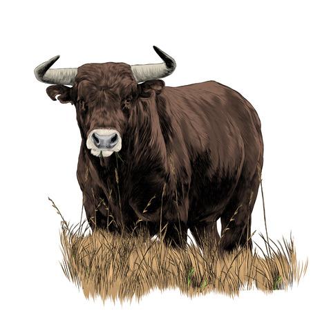 Illustration pour Bull sketch vector graphics color picture - image libre de droit