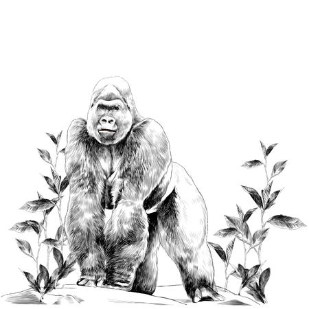 Illustration pour A gorilla stands on the stone. Sketch vector. - image libre de droit