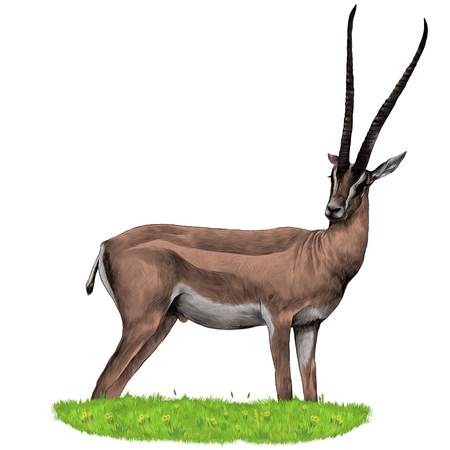 Ilustración de A Gazelle stands in the grass sketch vector graphics color picture - Imagen libre de derechos