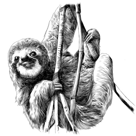 Ilustración de Sloth hanging on the branches. Sketch vector. - Imagen libre de derechos