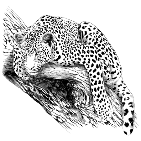 Illustration pour Yes leopard is the trunk of the tree sketch vector graphics monochrome drawing - image libre de droit