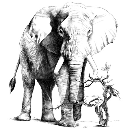 Illustration pour Elephant in full growth is in the sand, the dry branch grows, sketch vector graphics monochrome drawing - image libre de droit