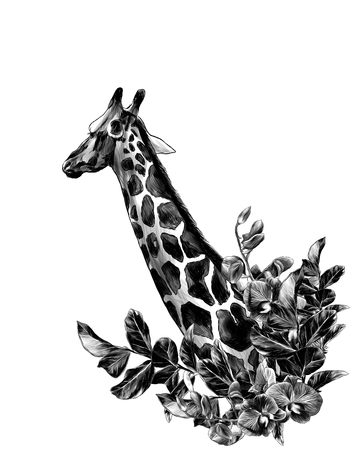Photo pour giraffe head sideways with a wreath in the form of a frame from the bottom of the tree branches with leaves and branches of Orchid flowers, sketch vector graphics monochrome illustration - image libre de droit