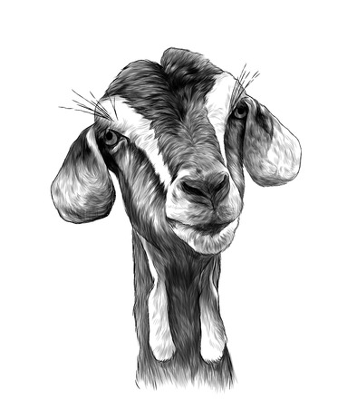 Illustration pour goat head girl with dangles on the bottom of the muzzle, sketch vector graphics monochrome illustration on white background - image libre de droit