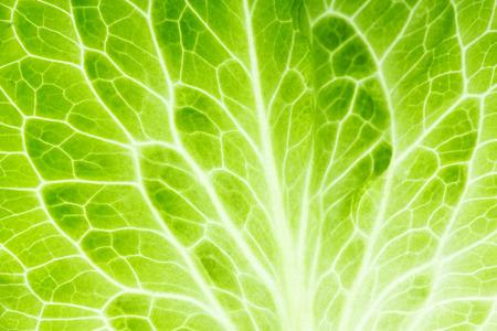 Photo pour Fresh lettuce leaf closeup. Food background - image libre de droit