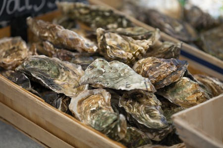 Foto de Traditional  fish market stall full of fresh shell oysters - Imagen libre de derechos