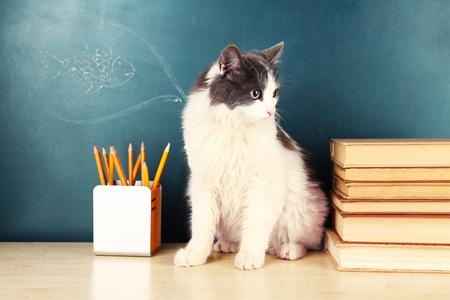 Adorable cute cat sitting on table near green chalkboard