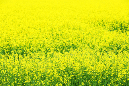 Photo pour Beautiful rape in field - image libre de droit