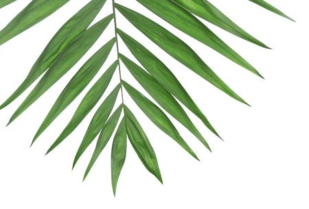 Foto de Beautiful palm leaf isolated on white - Imagen libre de derechos