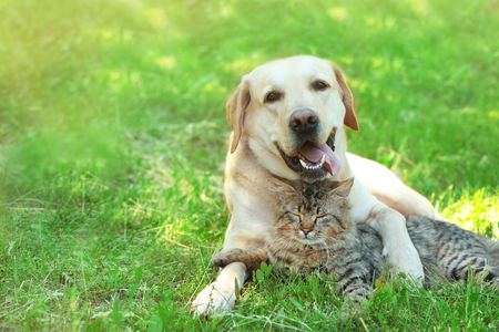 Photo for Friendly dog and cat resting over green grass background - Royalty Free Image