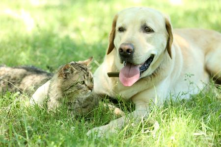 Photo pour Friendly dog and cat resting over green grass background - image libre de droit