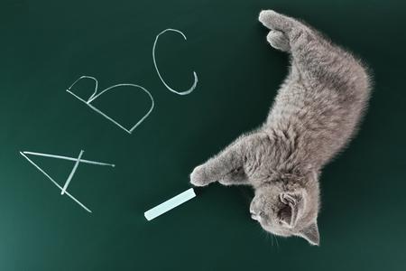 Cute gray kitten on green chalkboard background