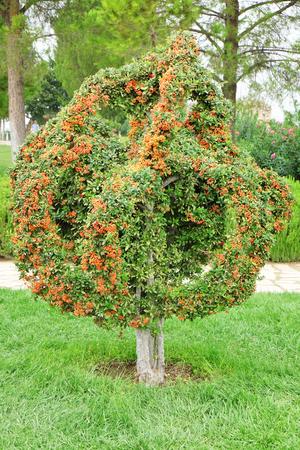 Foto de Single tree in Turkish park - Imagen libre de derechos