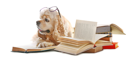 Photo for Dog and books isolated on white - Royalty Free Image