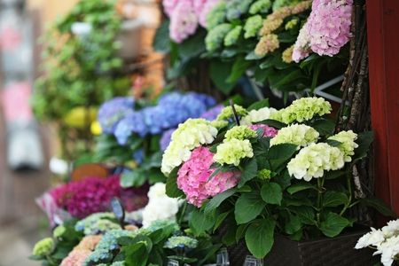 Photo for Colorful blooming flowers in a shop - Royalty Free Image