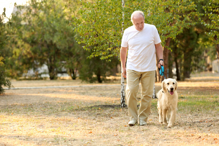 Photo for Senior man and big dog walking in park - Royalty Free Image